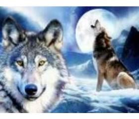 Алмазная мозайка «Волки и луна» 30х40