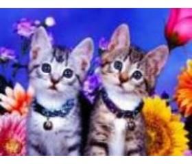 Алмазная мозайка «Два котенка» 30х40